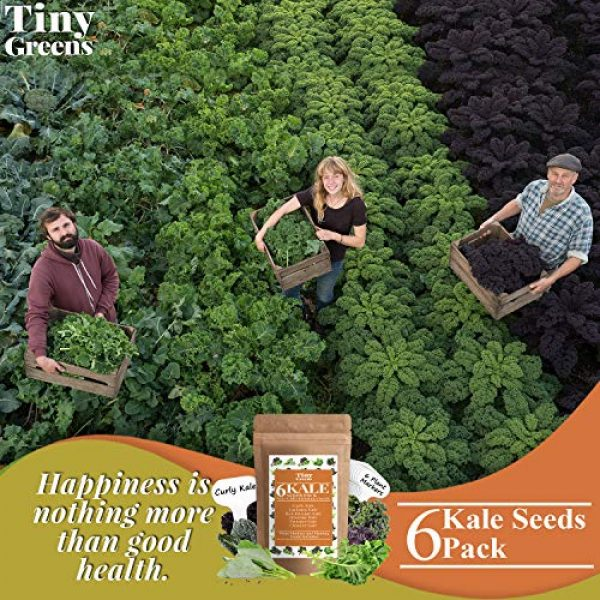 Tiny Greens Heirloom Seed 6 Grow Kale Seeds 6 Collection Pack for Planting(600 Seeds) Lacinato Kale Seeds, Curly Kale, Red Russian, Dwarf Siberian, Premier Kale, Chinese Kale | Heirloom Seeds Vegetables Non-GMO Vegetable Seeds
