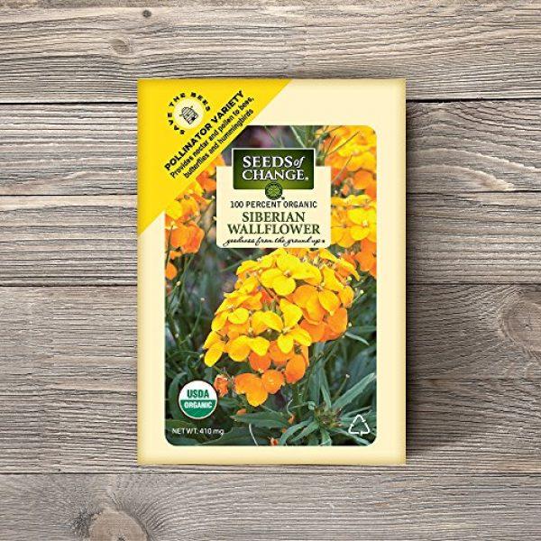 SEEDS OF CHANGE Organic Seed 2 Seeds Of Change 8175 Certified Organic Siberian Wallflower