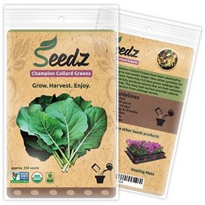 Seedz  1 Organic Collard Greens Seeds (APPR. 550) Champion Collard Greens - Heirloom Vegetable Seeds - Certified Organic