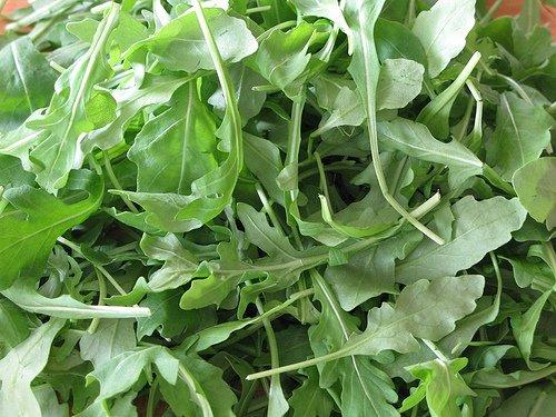 Dirt Goddess Super Seeds  2 Bulk Organic Arugula Seeds (1/2 lb) 82