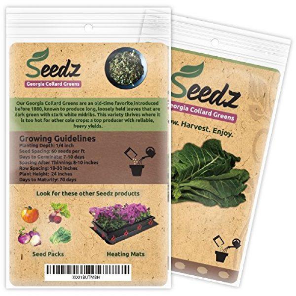 Seedz Organic Seed 3 Organic Collard Greens Seeds, APPR. 125, Georgia Collard Greens, Heirloom Vegetable Seeds, Certified Organic, Non GMO, Non Hybrid, USA