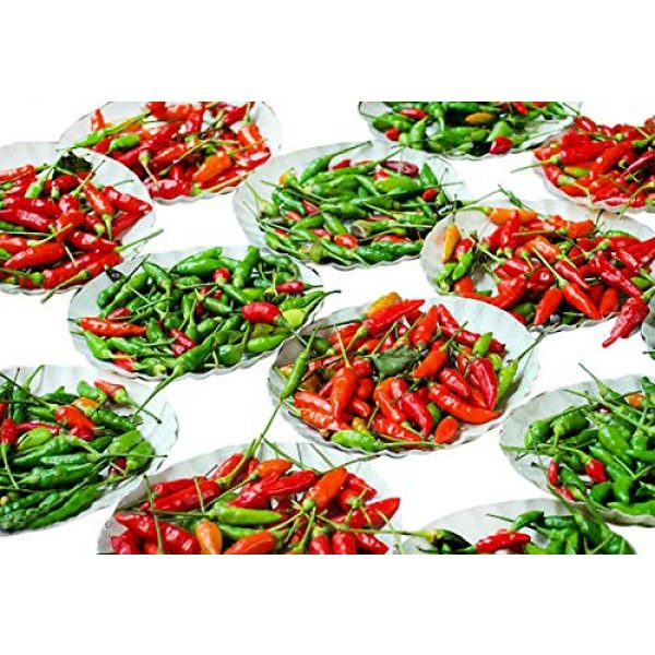 Harley Seeds Heirloom Seed 1 30+ Brazilian Pimenta Malagueta Hot Pepper Seeds Heirloom Non-GMO, Tabasco Type, Spicy, Delicious! from USA