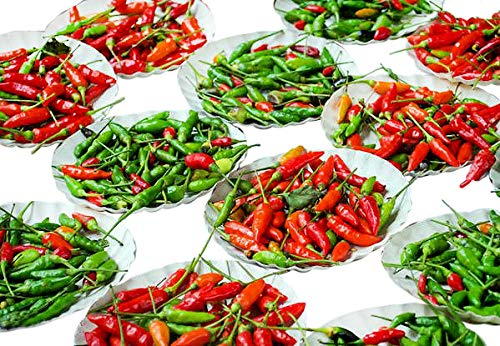 Harley Seeds  1 30+ Brazilian Pimenta Malagueta Hot Pepper Seeds Heirloom Non-GMO