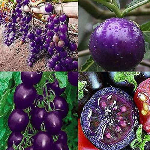 yingyi  3 Purple Tomato Seeds Tomato Seeds Vegetables Seeds Bonsai Vegetables Delicious Tasty Organic Seeds Tomato Plants Seeds for Planting Home Garden Yard Fruits Vegetables Bonsai Balcony Farm Indoor Outdoor