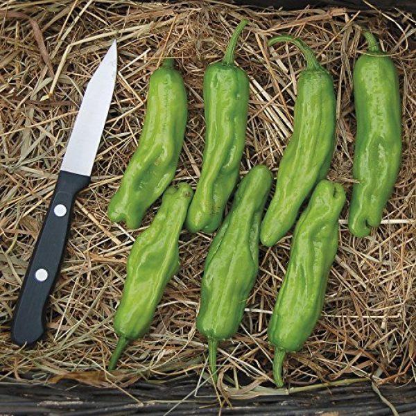 Seedz Organic Seed 2 Organic Pepper Seeds, APPR. 55, Shishito Pepper, Heirloom Vegetable Seeds, Certified Organic, Non GMO, Non Hybrid, USA