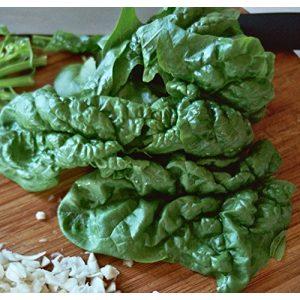Ohio Heirloom Seeds Heirloom Seed 1 Heirloom Spinach Seed Assortment- 4 Varieties- 600+ Seeds