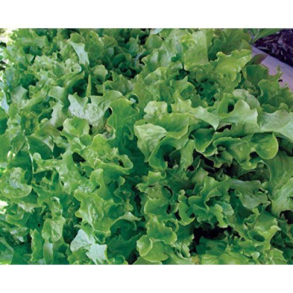 Burpee Organic Seed 2 Burpee Green Salad Bowl Organic Lettuce Seeds 1100 seeds