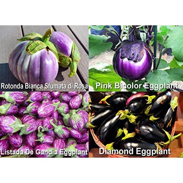 Harley Seeds Heirloom Seed 2 Please Read! This is A Mix!!! 30+ Eggplant Mix Seeds 11 Varieties Heirloom Non-GMO Aubergine, Asian, European, Italian, Profilic, Super Delicious, from USA