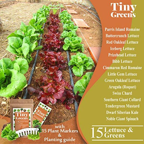 Tiny Greens Heirloom Seed 3 15 Heirloom Lettuce & Leafy Vegetable Seeds | 4000+ Seeds | Non GMO Bulk Lettuce Seeds for Planting - Kale, Spinach, Arugula, Oak, Romaine, Iceberg, Butter | Hydroponic, Home Garden, Indoor Outdoor