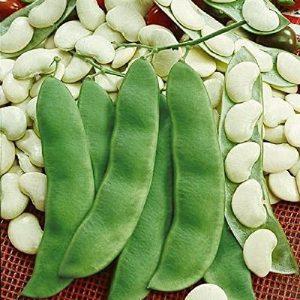 David's Garden Seeds  1 David's Garden Seeds Bean Lima Henderson SL4504 (Green) 50 Non-GMO
