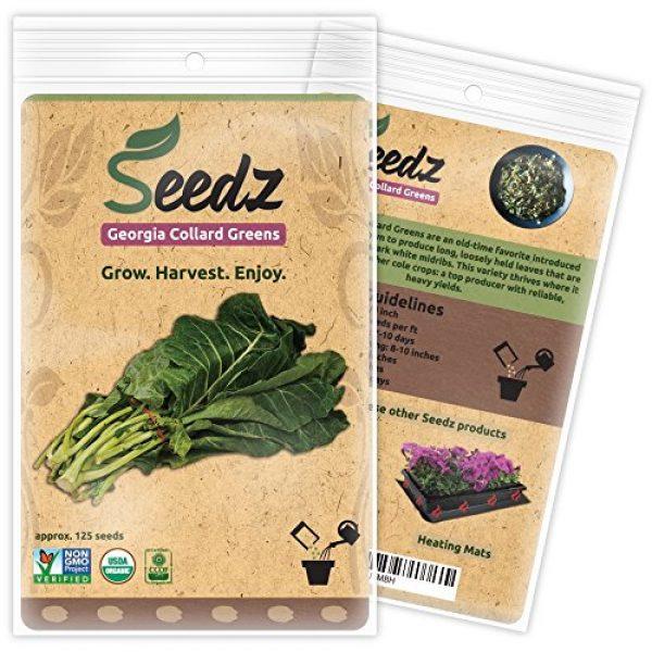 Seedz Organic Seed 1 Organic Collard Greens Seeds, APPR. 125, Georgia Collard Greens, Heirloom Vegetable Seeds, Certified Organic, Non GMO, Non Hybrid, USA