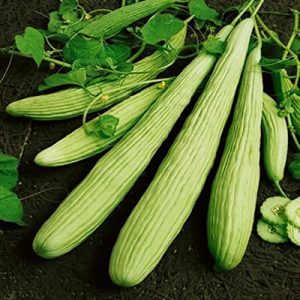 SeedsUA  1 Seeds Rare Cucumber Armenian Pickling Vegetable Heirloom Ukraine