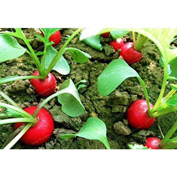 Panago Seeds Organic Seed 4 240+ Radish (Cherry Belle) Seeds for Garden Planting, Non-GMO Organic Heirloom Radish Seeds