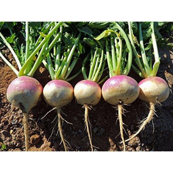 Liliana's Garden Heirloom Seed 3 Liliana's Garden Turnip Seeds - Purple Top, White Globe - Heirloom