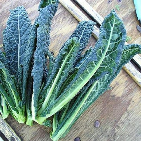 Hill Creek Seeds Heirloom Seed 2 Kale Seeds Tuscan Dinosaur Italian Heirloom Non GMO Seeds