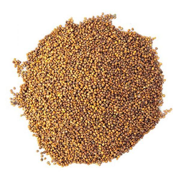 Rainbow Heirloom Seed Co. Heirloom Seed 3 Arugula Microgreen Seeds Bulk 1 LB Resealable Bag   Spicy & Flavorful Greens   Non GMO Heirloom Seeds   Rocket Salad by Rainbow Heirloom Seed Co.