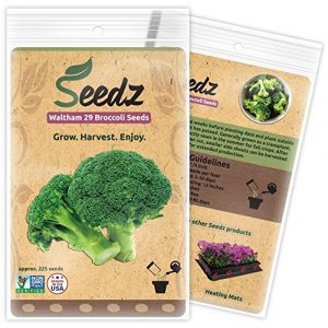 Seedz Organic Seed 1 Organic Broccoli Seeds (APPR. 225) Broccoli Planting Seeds - Heirloom Vegetable Seeds - Certified Organic, Non-GMO, Non Hybrid - USA