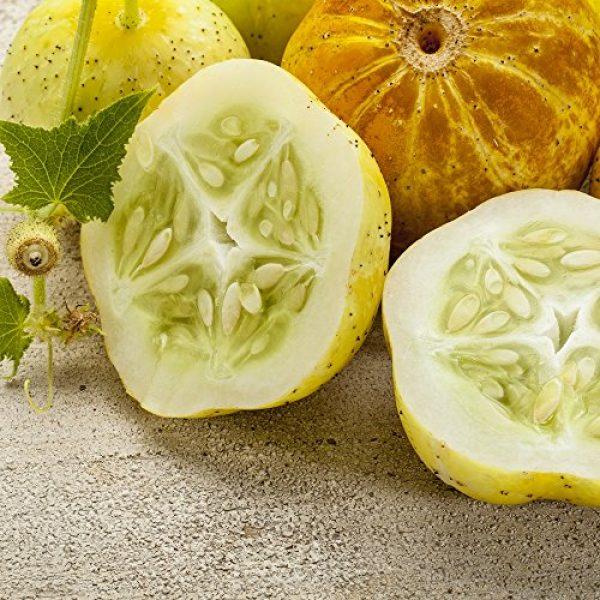 Isla's Garden Seeds Heirloom Seed 2 Lemon Cucumber Seeds,125+ Premium Heirloom Seeds,Fantastic addition to your home garden! Fresh & Delicious! Popular Choice! (Isla's Garden Seeds),Non Gmo,85-90% Germination Rates,Highest Quality Seeds