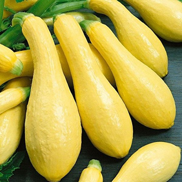 Isla's Garden Seeds Heirloom Seed 4 Summer Early Prolific Straightneck Squash Seeds(Yellow)! - 50+ Premium Heirloom Seeds - ON Sale! - Cucurbita Pepo - (Isla's Garden Seeds) - Non GMO - 90% Germination - Total Quality