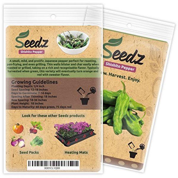 Seedz Organic Seed 3 Organic Pepper Seeds, APPR. 55, Shishito Pepper, Heirloom Vegetable Seeds, Certified Organic, Non GMO, Non Hybrid, USA