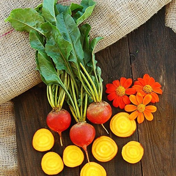 Seedz Organic Seed 3 Organic Beet Seeds, APPR. 225, Touchstone Gold Beet, Heirloom Vegetable Seeds, Certified Organic, Non GMO, Non Hybrid, USA