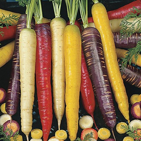 Isla's Garden Seeds Heirloom Seed 3 Rainbow Blend Carrot Seeds, 500+ Premium Heirloom Seeds, Rare Varieties, Colorful Mix & Fantastic Addition to Your Garden! (Isla's Garden Seeds), 85% Germination Rate, Non GMO, Highest Quality