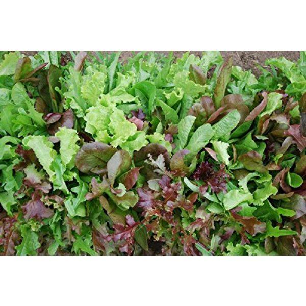 Dirt Goddess Super Seeds Organic Seed 3 Bulk Organic Mesclun Mix Seeds (1 LB) 425,000 Seeds