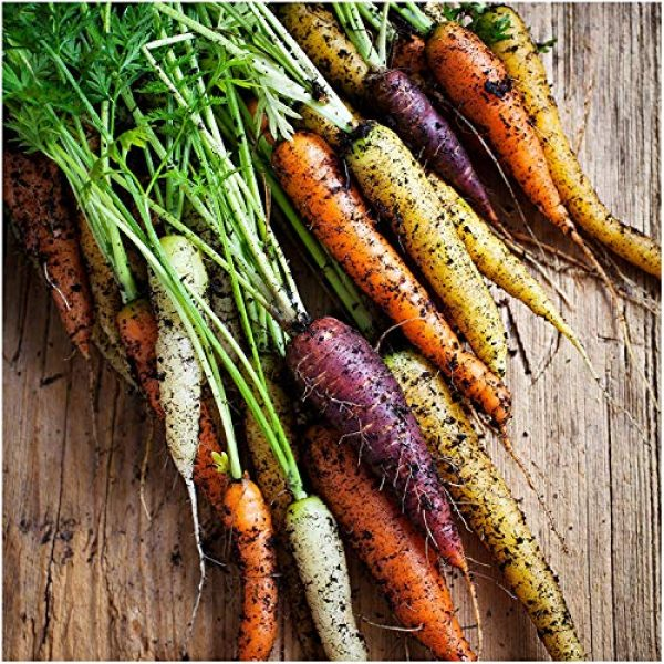 Isla's Garden Seeds Heirloom Seed 2 Rainbow Blend Carrot Seeds, 500+ Premium Heirloom Seeds, Rare Varieties, Colorful Mix & Fantastic Addition to Your Garden! (Isla's Garden Seeds), 85% Germination Rate, Non GMO, Highest Quality