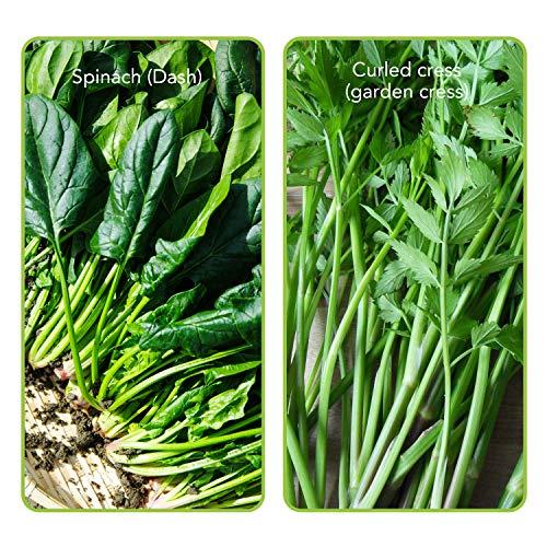8 Varieties Organic Seeds Heirloom Lettuce Seed