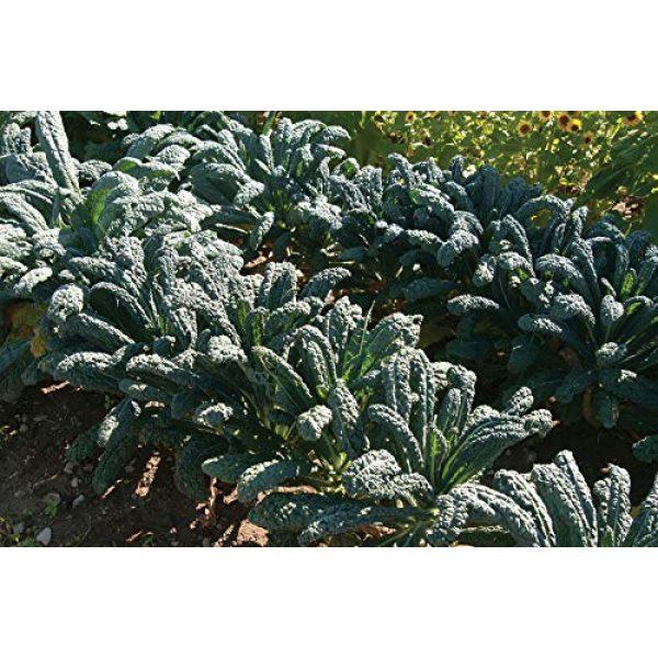 David's Garden Seeds Heirloom Seed 1 David's Garden Seeds Kale Toscano SL2123 (Green) 500 Non-GMO, Heirloom Seeds