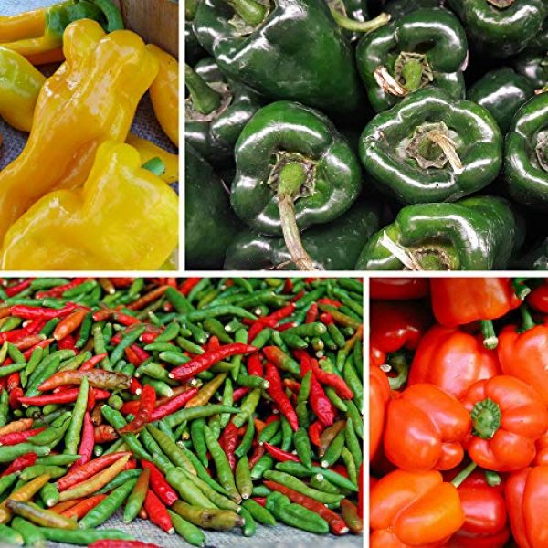 Mountain Valley Seed Company Heirloom Seed 3 8-Pack Non-GMO Heirloom Sweet Pepper Seeds & Hot Pepper Seeds - Anaheim Pepper Seeds, Habanero Seeds, Banana Pepper Seeds, Bell Pepper Seeds, Jalapeno Seeds, Cayenne Pepper Seeds, Green Pepper Seeds