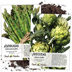 Seed Needs Heirloom Seed 1 Seed Needs, Non-GMO Mary Washington Asparagus & Green Globe Artichoke Seed Packet Collection (100+ Fresh Garden Seeds for Planting) Heirloom