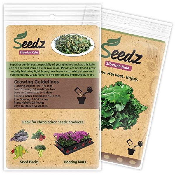 Seedz Organic Seed 3 Organic Kale Seeds, APPR. 550, Siberian Kale, Heirloom Vegetable Seeds, Certified Organic, Non GMO, Non Hybrid, USA