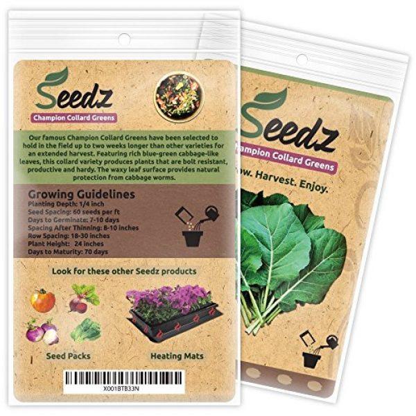 Seedz Organic Seed 3 Organic Collard Greens Seeds (APPR. 550) Champion Collard Greens - Heirloom Vegetable Seeds - Certified Organic, Non-GMO, Non Hybrid - USA
