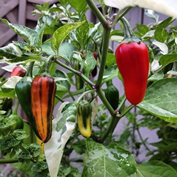 Ohio Heirloom Seeds Heirloom Seed 3 Hot Pepper Seed Assortment- 6 Varieties, Over 300 Seeds, All Non-GMO Heirloom Varieties