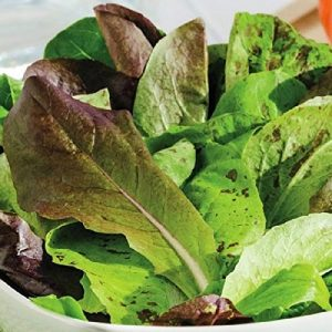 David's Garden Seeds  1 David's Garden Seeds Lettuce Mix Tricolor OU3434 (Multi) 200 Non-GMO