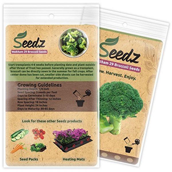 Seedz Organic Seed 3 Organic Broccoli Seeds (APPR. 225) Broccoli Planting Seeds - Heirloom Vegetable Seeds - Certified Organic, Non-GMO, Non Hybrid - USA