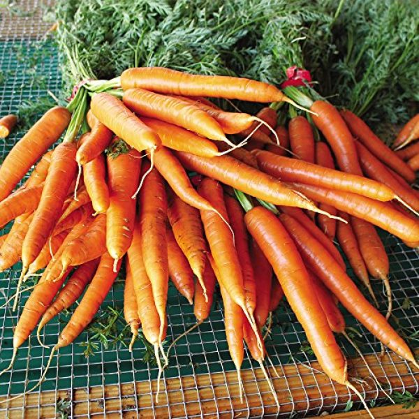 SEEDS OF CHANGE Organic Seed 4 Seeds of Change Certified Organic Garden Carrot Mix