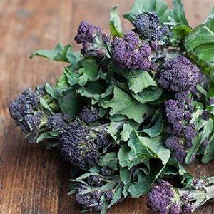 David's Garden Seeds Heirloom Seed 1 David's Garden Seeds Broccoli Purple Sprouting SL1161 (Purple) 400 Non-GMO, Heirloom Seeds
