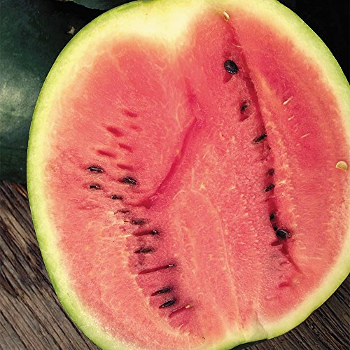 SEEDS OF CHANGE  4 Seeds of Change Certified Organic Sugar Baby Watermelon