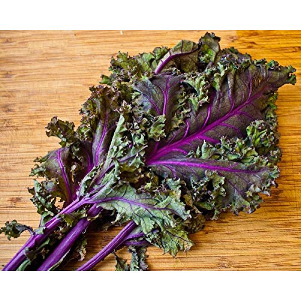 "Isla's Garden Seeds Organic Seed 3 ""Red Russian"" Kale Seeds, 750+ Premium Heirloom Seeds, ON SALE!, Top Selling Kale Seed, (Isla's Garden Seeds), Non Gmo Organic, 85% Germination Rates, Highest Quality Seeds, 100% Pure"