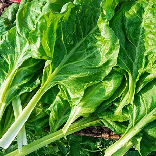 Isla's Garden Seeds Heirloom Seed 2 Perpetual Spinach Seeds (Swiss Chard), 300+ Premium Heirloom Spinach Seeds, Beautiful Large Leaves of Spinach! Fantastic Addition! (Isla's Garden Seeds), Non GMO, 80-85% Germination, Highest Quality