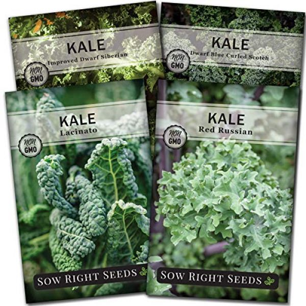 Sow Right Seeds Heirloom Seed 1 Sow Right Seeds - Kale Seed Collection for Planting - Non-GMO Heirloom Packet with Instructions to Plant and Grow a Home Vegetable Garden, Great Gardening Gift