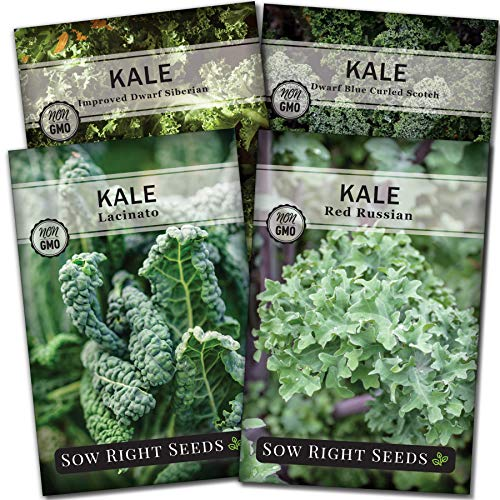 Sow Right Seeds  1 Sow Right Seeds - Kale Seed Collection for Planting - Non-GMO Heirloom Packet with Instructions to Plant and Grow a Home Vegetable Garden