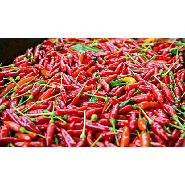 Harley Seeds Heirloom Seed 5 30+ Brazilian Pimenta Malagueta Hot Pepper Seeds Heirloom Non-GMO, Tabasco Type, Spicy, Delicious! from USA