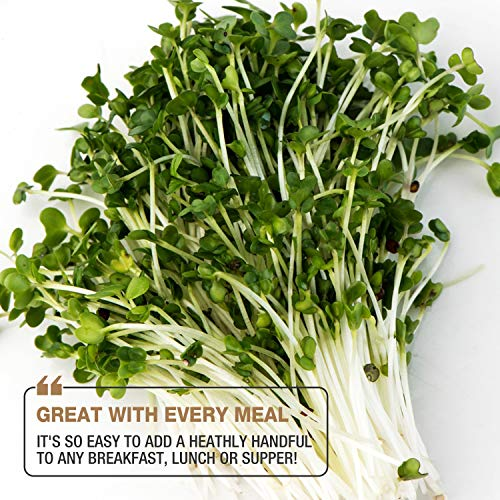 Masontops  5 Mumm's Sprouting Seeds - Classic Big Broccoli Sprouts - 200 GR - Sprout Your Own Organic Microgreens - Easy Sprouter Kit
