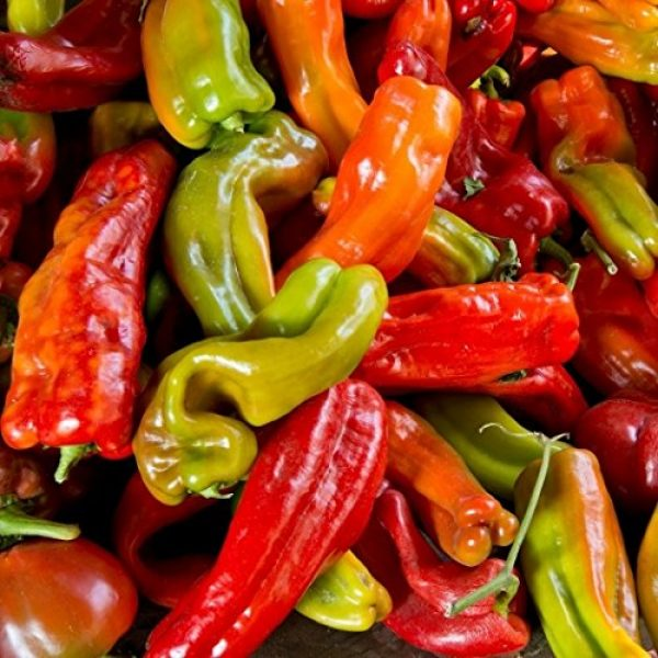 David's Garden Seeds Organic Seed 1 David's Garden Seeds Pepper Chili Anaheim SL1120 (Green) 50 Non-GMO, Organic, Heirloom Seeds