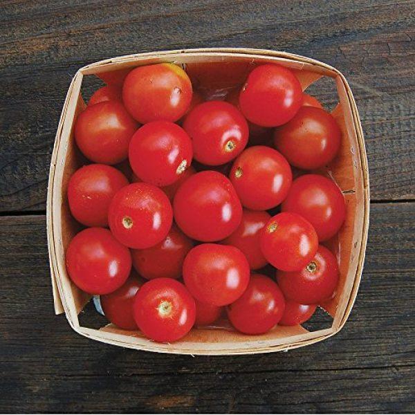 Seedz Organic Seed 2 Organic Tomato Seeds, APPR. 75, Sweet Cherry Tomato, Vegetable Seeds, Certified Organic, Non GMO, Non Hybrid, USA