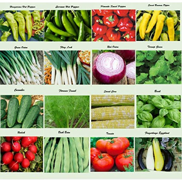 Apexmode Organic Seed 1 Set of 16 Assorted Organic Vegetable & Herb Seeds 16 Varieties Create a Deluxe Garden All Seeds are Heirloom, 100% Non-GMO Sweet Pepper Seeds, Hot Pepper Seeds-Red Onion Seeds- Green Onion Seeds