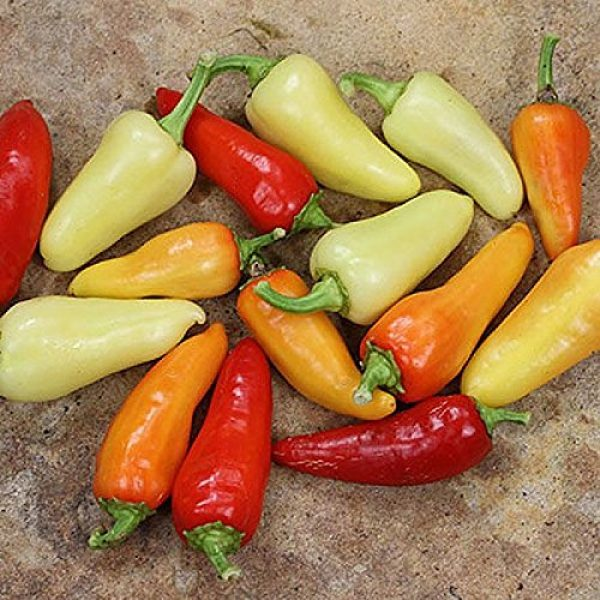 Isla's Garden Seeds Organic Seed 2 Santa Fe Grande Hot Pepper Seeds, 50+ Premium Heirloom Seeds, Chili Peppers, (Isla's Garden Seeds) Non Gmo Organic Seeds, 90% Germination, Highest Quality!